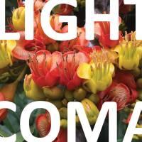Light_Coma_CONCORD